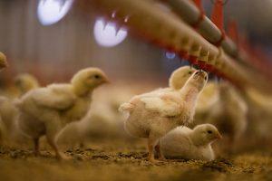 oplosbaarheidsproblemen-bij-diergeneesmiddelen-toegepsat-in-lage-concentraties
