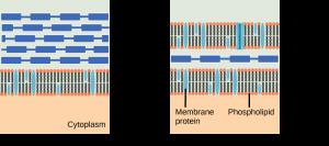 onderbouwd-inzetten-van-antibiotica-figuur-4-gram-vs