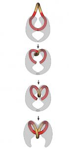onderbouwd-inzetten-van-antibiotica-figuur-5-fluoroquinolones-vologodskii-2004