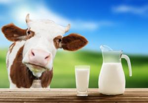 advies-van-de-ema-over-de-te-hanteren-wachttermijn-bij-het-gebruik-van-lidocaine-bij-landbouwhuisdieren